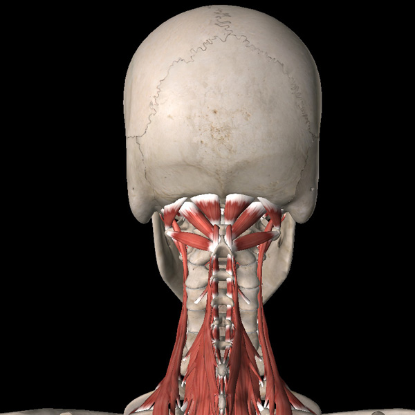 Как избавиться от болей в шейном отделе позвоночника - к статье Академии Wellness - 3